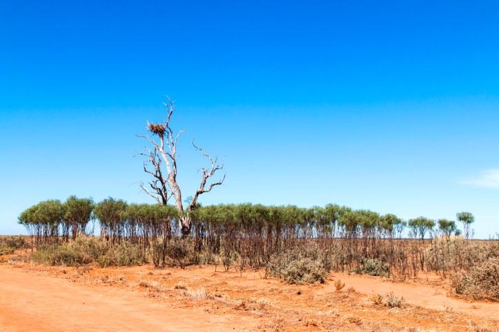 Emu Bush Regeneration