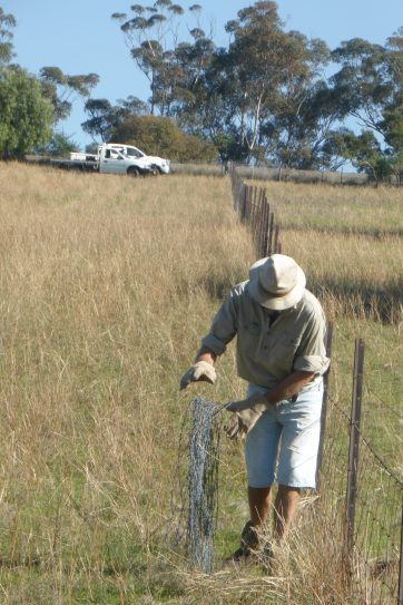 Wayne rolling up the barbed wire that has been removed from the fence